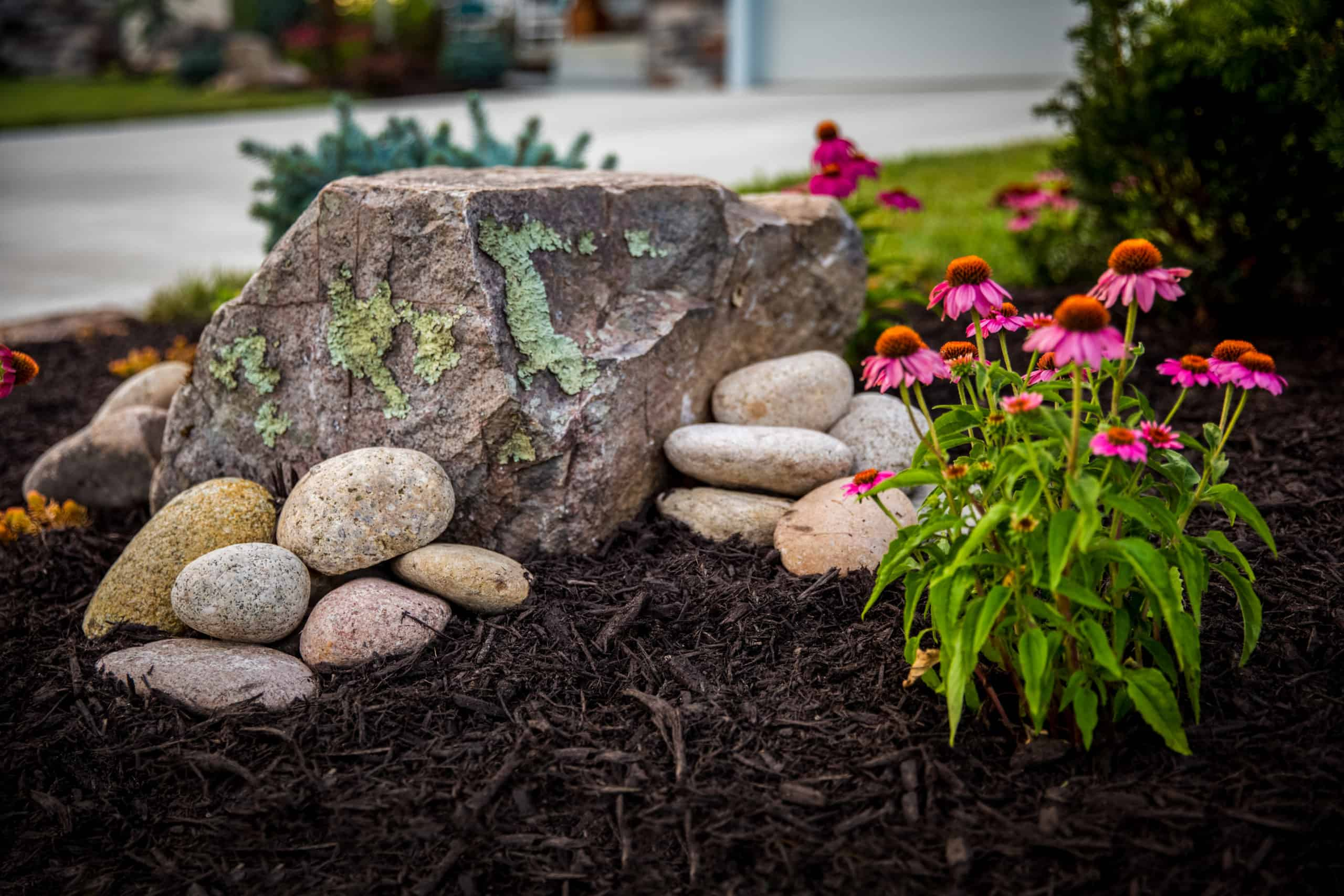 rocks and flowers in landscaping
